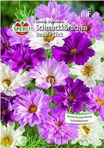 Schmuckkörbchen (Cosmea) Double Click