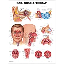 Ear, Nose and Throat Anatomical Chart