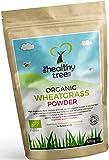 Bio Weizengras-Pulver aus Deutschland - reich an Proteinen, Ballaststoffen, Kalzium und Chlorophyll - ideal für grüne Superfood Säfte - Weizengraspulver bio von TheHealthyTree Company