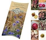 Saatgut Set: 'Bunte Beete', 4 alte geschmackvolle Bete-Sorten in rot, gelb, weiss und geringelt als Samen in schöner Geschenk-Verpackung