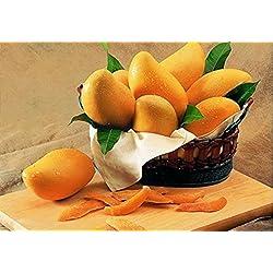 Shopmeeko 1pcs / package China sehr süße goldene Mango-Bonsai, seltene tropische frische saftige Frucht-Bonsai 100% Keimung
