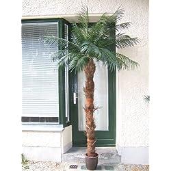Künstliche Phönix- Palme de Luxe ca. 2,50-2,70m hoch Spitzen-Qualität Neuheit