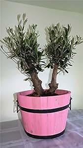 Best4garden Pot de fleurs moderne en bois avec olivier à double tronc Rose pastel Cadeau idéal pour toute la famille