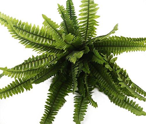Closer To Nature 30cm Boston Farn Plug Betten Pflanze - 5