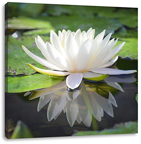 Weiße Lotusblume im Wasser, Format: 40x40 auf Leinwand, XXL riesige Bilder fertig gerahmt mit Keilrahmen, Kunstdruck auf Wandbild mit Rahmen, günstiger als Gemälde oder Ölbild, kein Poster oder Plakat