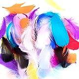 Vidillo Bunte Federn, 300 Stück bunt Gänsefedern, ideal als Dekoration zum Karnival für Halloween Fest Masken, Kostüme und Basteln für Kinder, Sicher und Ungiftig und Nicht verblassen(Feathers G)