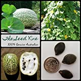 Portal Cool 10+ Fig Leaf calabaza Semillas (Cucurbita Ficifolia) Malabar Negro Seed Squash Vine