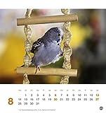 Freche Wellensittiche Postkartenkalender – Kalender 2017 - 9