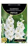 Bulbos - Gladiolo blanco puro flor rizada - Batlle