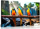 Bunte Papageien Aras Leinwand Wandbild Kunstdruck Bild, A1 76x51 cm (30x20in)