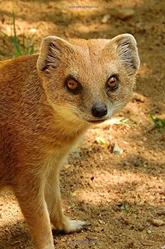 Cool Yellow Mongoose Cynictis Penicillata Animal Journal: 150 Page Lined Notebook/Diary