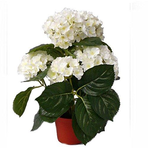 Shophaus24 Künstliche Hortensie creme getopft - Hortensienpflanze. H 36cm. (Seidenblumen Creme Hortensien)