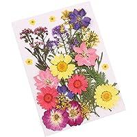ROKOO Flor prensada mezclada Flores secas Naturales Naturales DIY Arte Decoraciones Florales colección Regalo