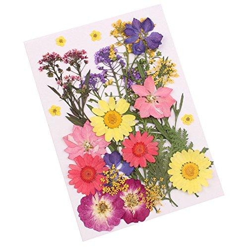 Características: Tipo: Flor presionadaEstilo: A / B / C / D / E (Opcional)Cantidad: 1 bolsaDescripción: 1. Flores reales secas prensadas. Todas las flores son naturales y orgánicas y están garantizadas.2. Tamaños lindos, hermosos colores. Materiales ...