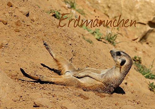 Erdmännchen (Tischaufsteller DIN A5 quer): Eine putzige Erdmännchenfamilie (Tischaufsteller, 14 Seiten) (CALVENDO Tiere) [Aug 24, 2013] Hultsch, Heike