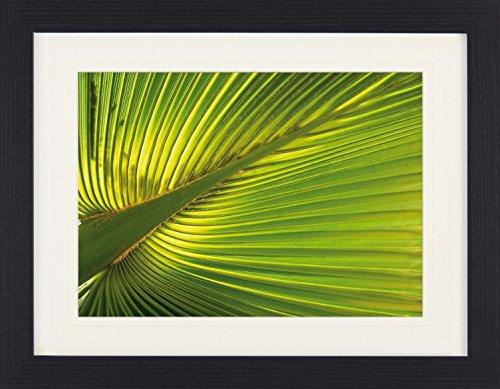 Preisvergleich Produktbild 1art1 113691 Palmen - Hanf-Palmenblatt Gerahmtes Poster Für Fans Und Sammler 40 x 30 cm