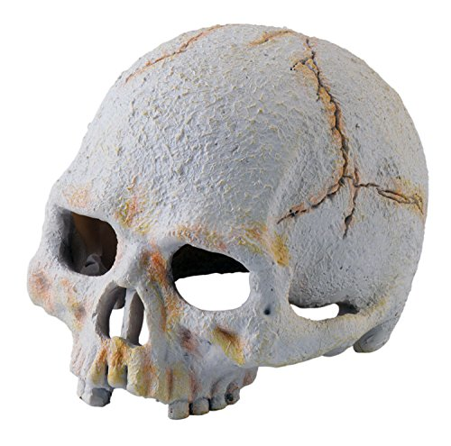 Exoterra Primate Skull Décoration pour Reptile/Amphibien Taille S
