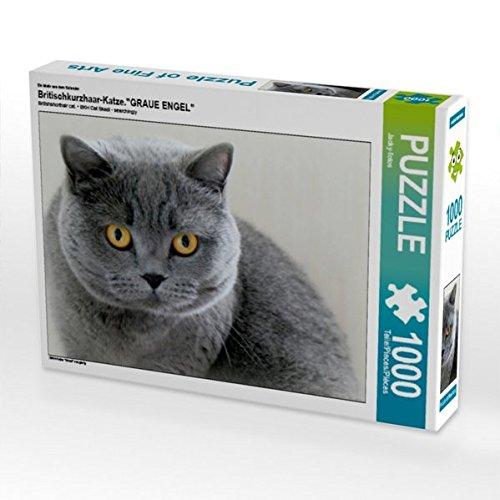 Britischkurzhaar-Katze.Ein Motiv aus dem Kalender