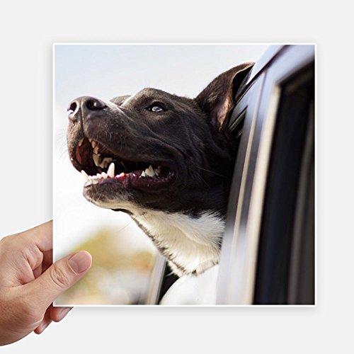 DIYthinker Schwarz Dog Tierphotographie-Bild-Quadrat-Aufkleber 20Cm Wand Koffer Laptop Motobike Aufkleber 4Pcs 20cm x 20cm Mehrfarbig