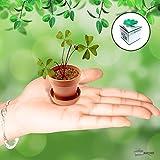 Trébol de cuatro hojas-Cadeau Maestro