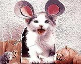 ttymei Peinture Numéros Lovery Chat Animal Cadeau Do-it-Yourself Numérique Coloriage Peinture Numérique Enfants Peinture À La Main Peinture Décoration D Intérieur 40x50cm with Frame