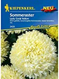 Astern Sommeraster Lady Coral Yellow