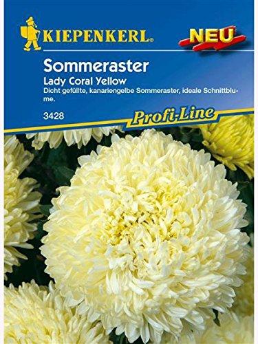 Astern Sommeraster Lady Coral Yellow (Womens Erde Ernte)