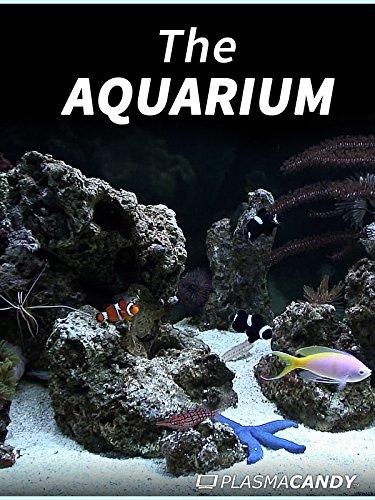 the-aquarium