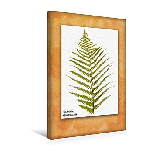 Calvendo Premium Textil-Leinwand 30 cm x 45 cm hoch, Baumfarn (Cyatheales) | Wandbild, Bild auf Keilrahmen, Fertigbild auf echter Leinwand, Leinwanddruck Natur Natur