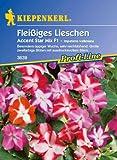 Fleißiges Lieschen, 'Accent Star Mix F1'