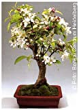 Tropica - Bonsai - melo decorativo malus halliana - 30 semi