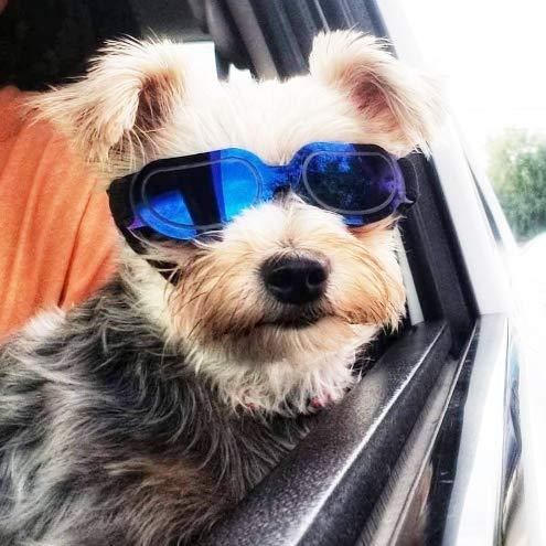 Homesupplier Hunde Schwimmbrille mit UV-Sonnenbrillen, wasserdicht, winddicht, für kleine Hunde, Doggy Brille für Welpen und Katzen, Tierarzt mit Augenschutz