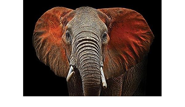 Vließ Fototapete Tapete Wandbild Elefant mit roten Ohren MS0911752/_VEMVT