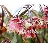 ¡Venta! 100 PC / bolso Semillas Semillas de eucalipto raras gigante árbol tropical de plantas con flores para jardín plantaciones al aire libre Bonsai regalo 13