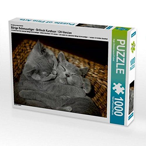 Ein Motiv aus dem Kalender Bärige Schmusetiger - Britisch Kurzhaar / CH-Version 1000 Teile Puzzle quer