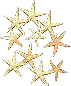 10 echte amerikanische Seesterne Fischernetz Deko, 7-10 cm (natur) flach
