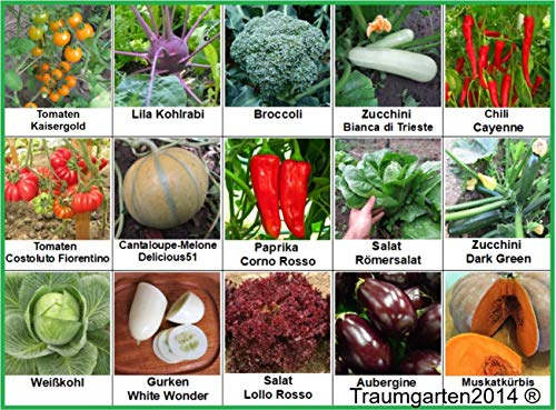 Gemüse Set 2: Broccoli Kürbis Gurken Kürbis Zucchini Weißkohl Aubergine Kohlrabi ... Samen Saatgut