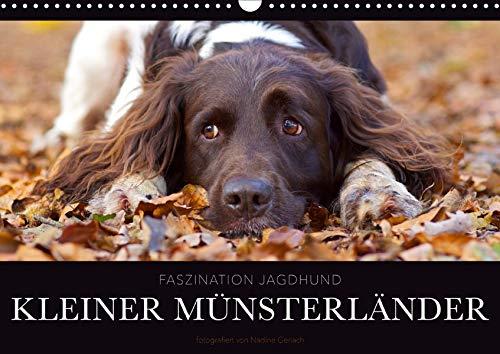 Faszination Jagdhund - Kleiner Münsterländer (Wandkalender 2020 DIN A3 quer): Kleiner Münsterländer Vorstehhund - Ein Leben neben der Jagd (Monatskalender, 14 Seiten ) (CALVENDO Tiere)