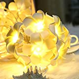 TAOtTAO Vintage Frangipani Blume LED Fairy Light String Batterie Home Party Hochzeit