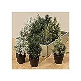 Künstlicher kleiner Weihnachtsbaum H: 21 cm im Topf 3er Set (Tanne, Blautanne und it Reif bedeckt) Christbaum Tisch Weihnachten