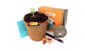 bioQ Plantable Rakhi (containing Seeds) | Eco Friendly Kit with Planting Set & Festive Essentials | Orange Sun Design | Grow Plants from Rakhi
