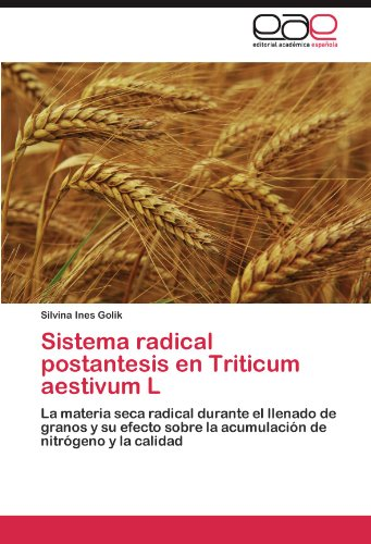 Sistema radical postantesis en Triticum aestivum L por Golik Silvina Ines