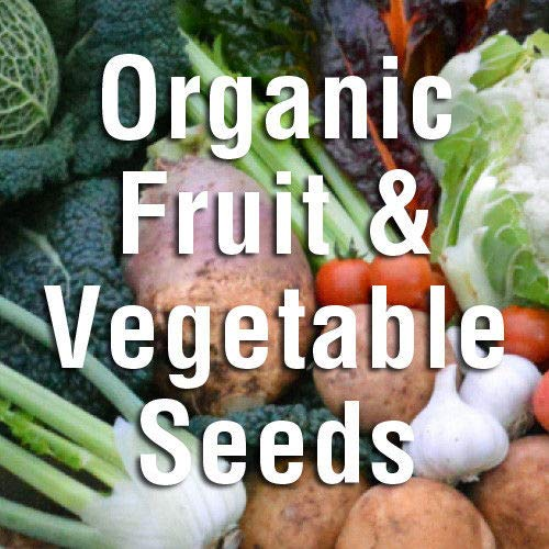 portal cool di zucchine: semi johnsons organici per coltivare frutta e verdura pacchetti di semi naturali