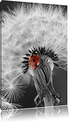 schöner Marienkäfer auf Pusteblume schwarz/weiß, Format: 70x100 auf hochkantiges Leinwand, XXL riesige Bilder fertig gerahmt mit Keilrahmen, Kunstdruck auf Wandbild mit Rahmen, günstiger als Gemälde oder Ölbild, kein Poster oder Plakat