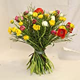 Blumenstrauß Ranunkeln im Trio Size 35 Euro