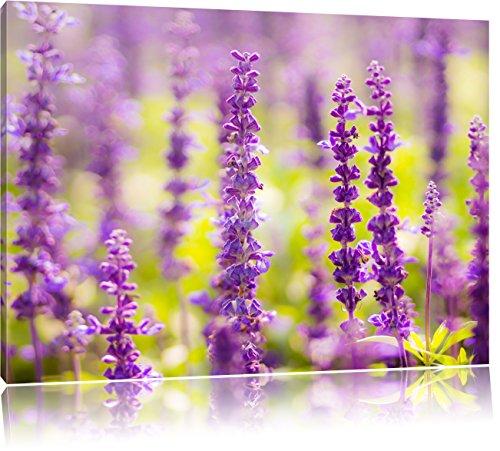bellissimi fiori viola lavanda, formato: 80x60 su tela, XXL enormi immagini completamente Pagina con la barella, stampa d'arte sul murale con telaio, più economico di pittura o un dipinto a olio, non un manifesto o un banner,