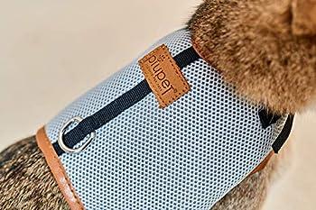 Premium Harnais Chat de PiuPet | Laisse de chat de 1,20 m | Parure pour chat sûre | Collier pour chaton | Taille S