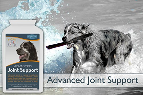 Advanced Joint Support Supplement For Dogs, With Powerful Glucosamine, Chondroitin, Green Lipped Mussel, MSM, Curcumin & Hyaluronic Acid, 120 Tablets, Natural Arthritis Pain Relief, UK Manufactured