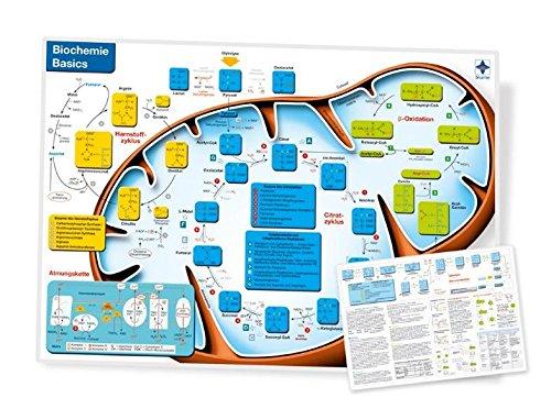 Biochemie Basics, DIN A4, laminiert
