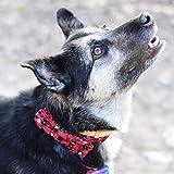 NimbleMinLki Halsband für Hunde und Katzen, Schneeflocken-Design, Nylon, verstellbar, Rot, Glas, rot, S